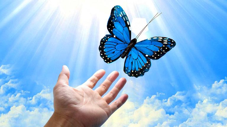 Hand releasing a butterfly